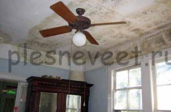 Плесень на потолке в квартире