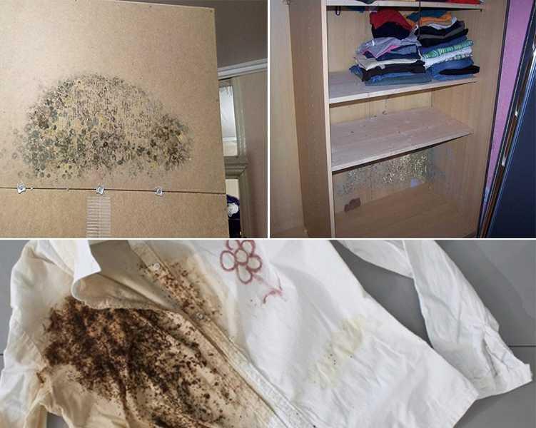 Плесень в бельевом шкафу и на одежде
