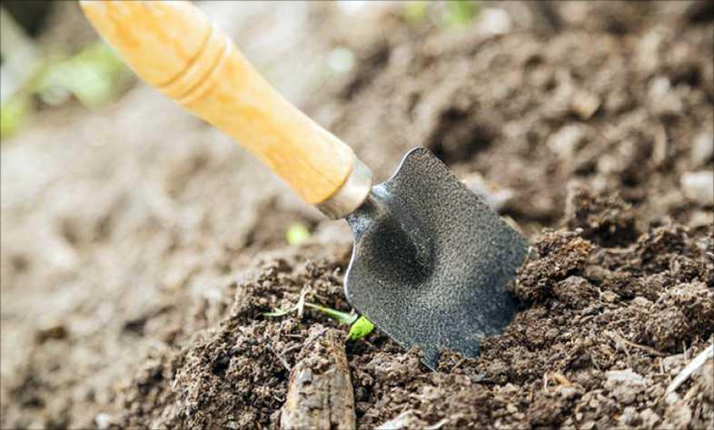 Снимаем плесень на земле в рассаде