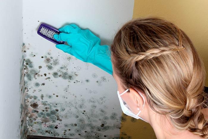 Как зачистить плесень