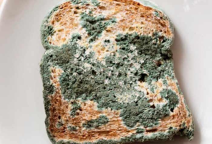 Хлеб с плесенью