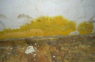 Как убрать желтую плесень