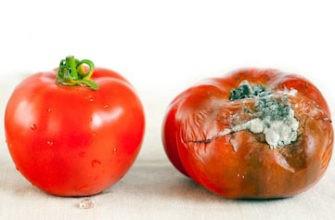 Плесень на овощах
