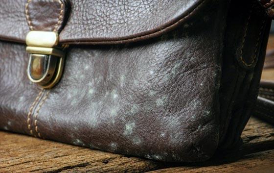 плесень на кожаной сумке