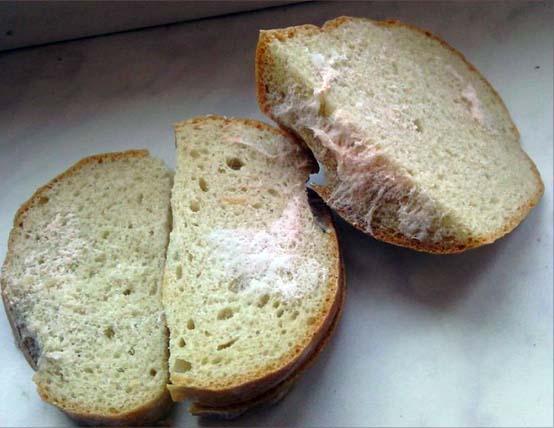 оранжевая плесень на хлебе