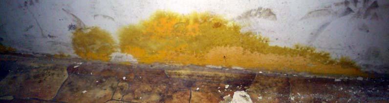 оранжевая плесень на стенах