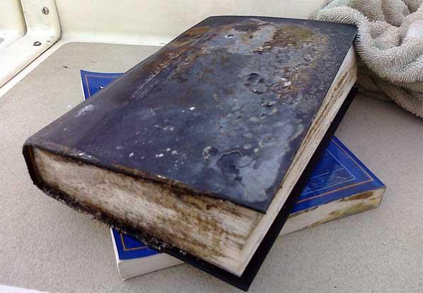 плесень на книге