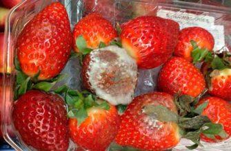Можно есть ягоды с плесенью