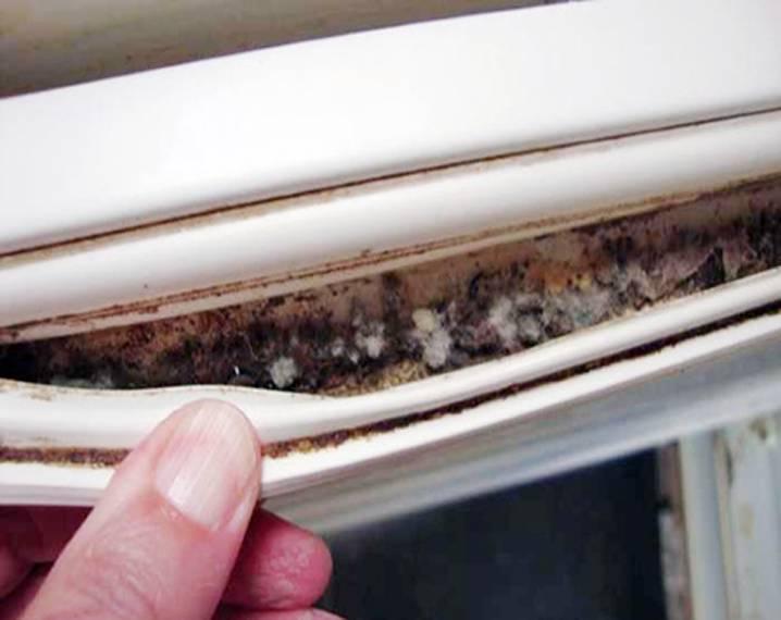 плесень на резинке холодильника