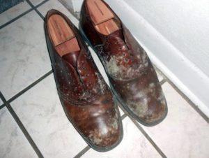 плесень на туфлях