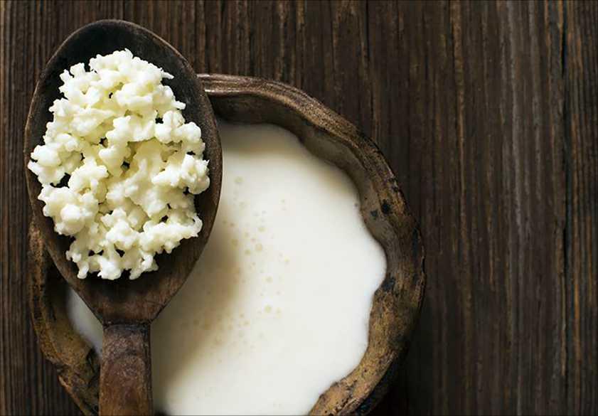 тибетский молочный грибок