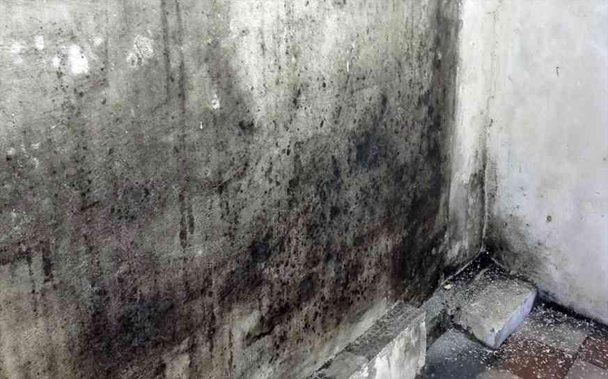 плесень на стене что делать