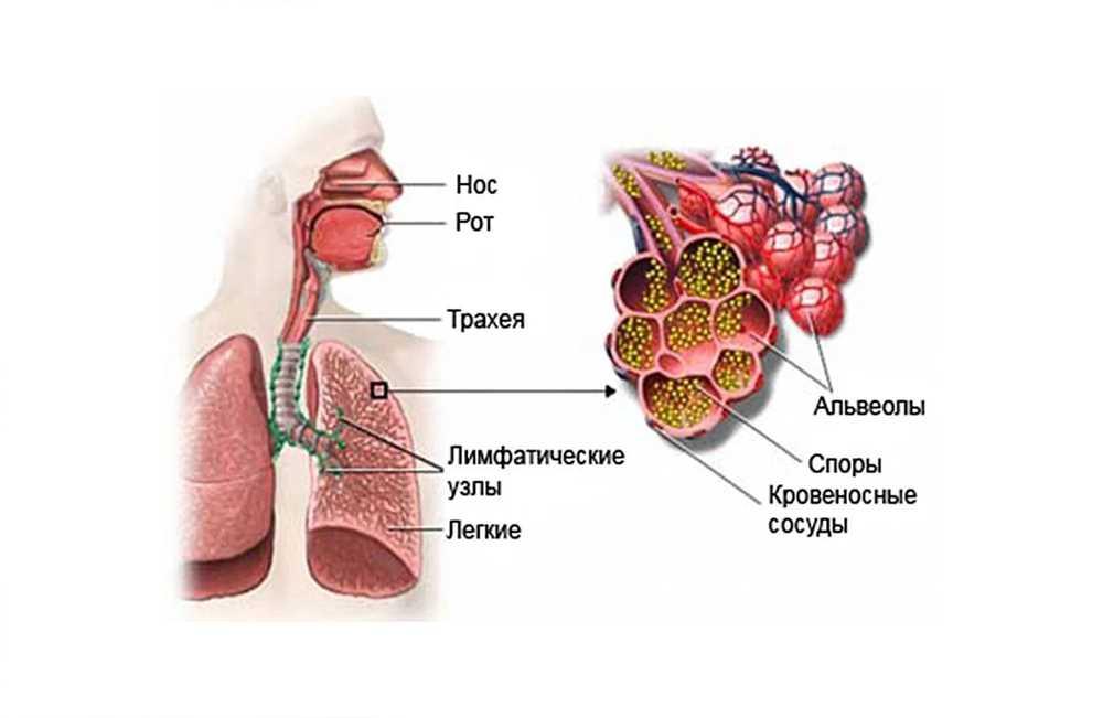 Аспергиллез органов дыхания