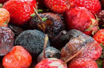 Плесень на ягодах клубники