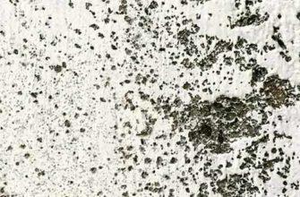 Как убрать плесень на стенах